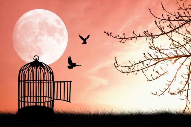 pink-bird-cage